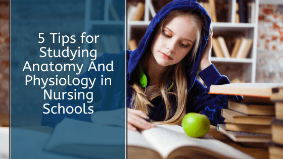 5 Tips for Studying Anatomy And Physiology in Nursing Schools