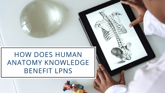 How Does Human Anatomy Knowledge Benefit LPNs