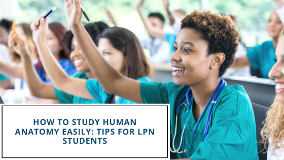 How To Study Human Anatomy Easily: Tips For LPN Students