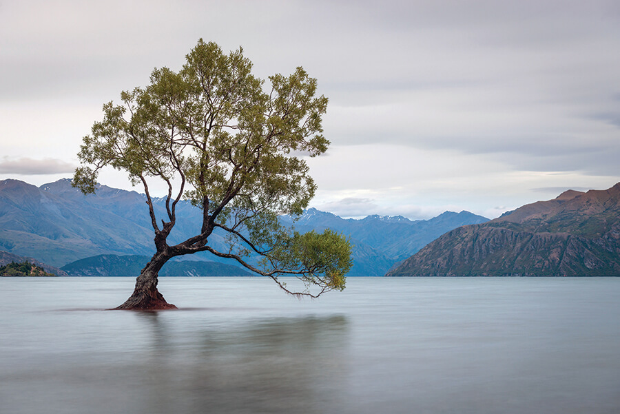 Iconic tree in Wanaka lake at dawn, South Island of New Zealand