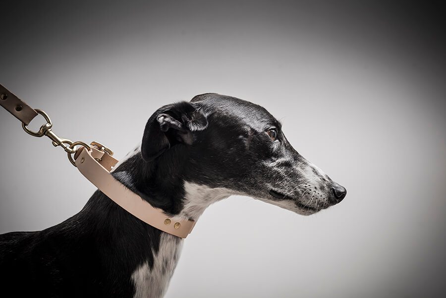 Chester wears: Nude leather & brass collar and lead from Dogdogdog. dogdogdog.co l instagram: dogdogdog_nz