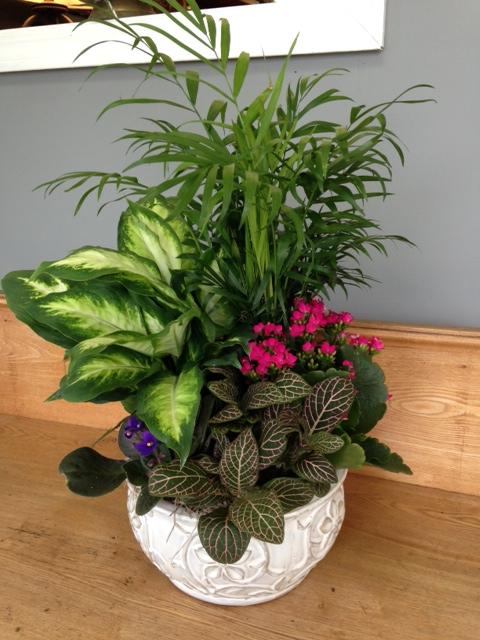 Dish Garden Memorial Vervilles Flowers