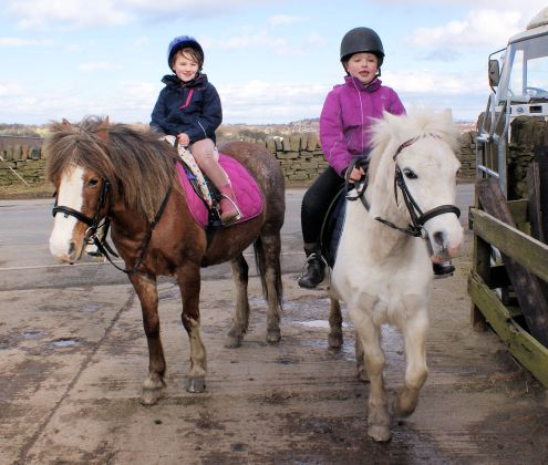 Taking the Kids Horse Riding