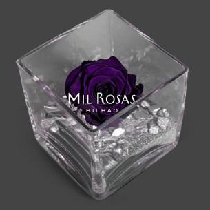 Rosa Eterna morada
