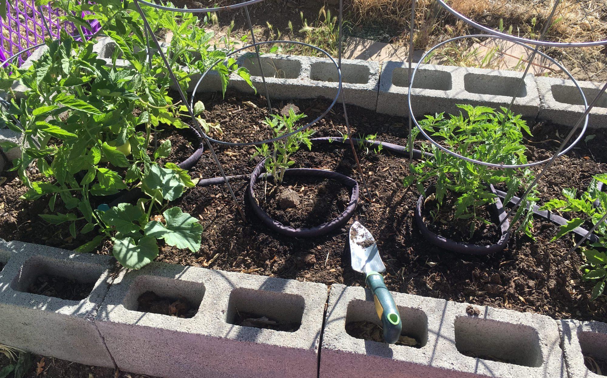 The Very Easy Veggie Garden