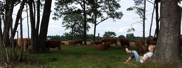 Tussen de Schotse Hooglanders, augustus 2012