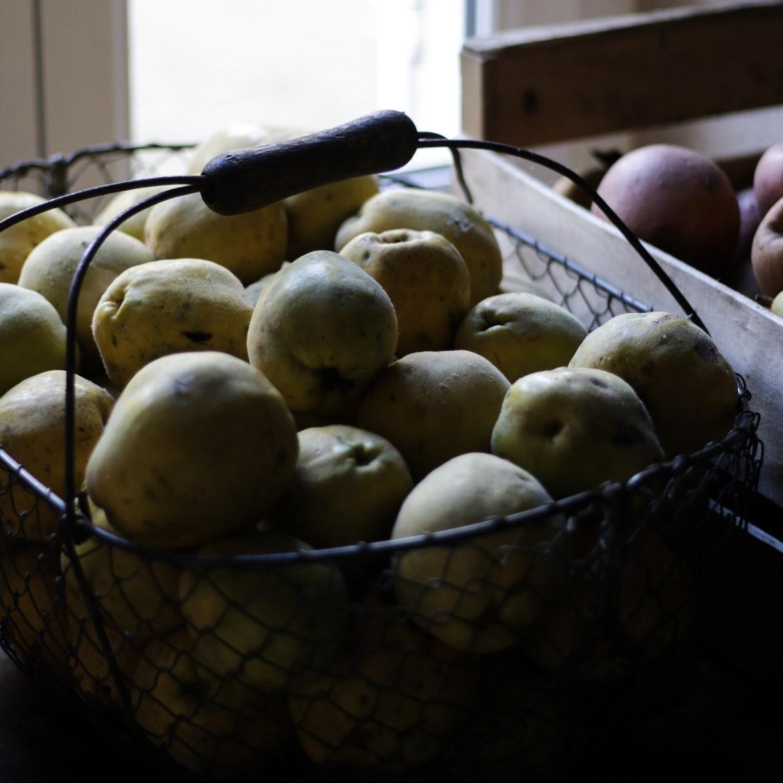 pomme appellations cidricoles