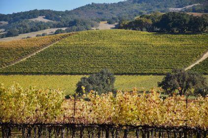 sonoma_vineyards