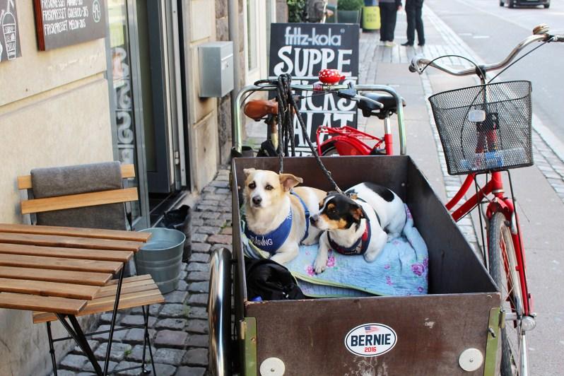 copenhagen-very-joelle-dogs