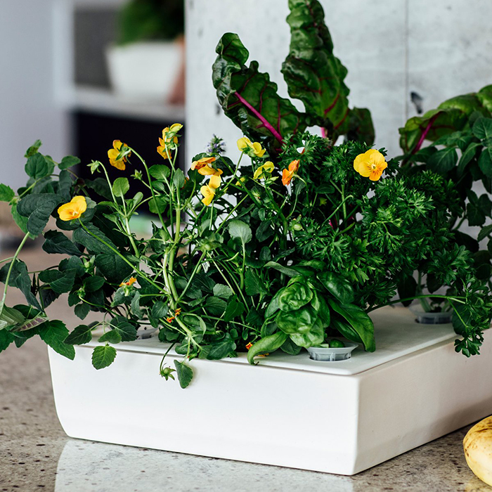Ceramic winter indoor garden by Studio Ilot