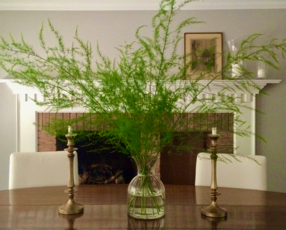 Forcing Blooms on Branches to Bring Indoors