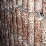 Размещение грибных блоков вешенки