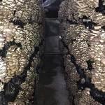 Вопросы — ответы по производству грибов