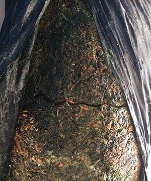 зеленая плесень в грибном блоке