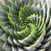 The Hidden Energy Science of Sacred Geometry