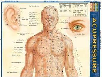 accupressure chart Acupressure Chart Vesica Institute for Holistic Studies