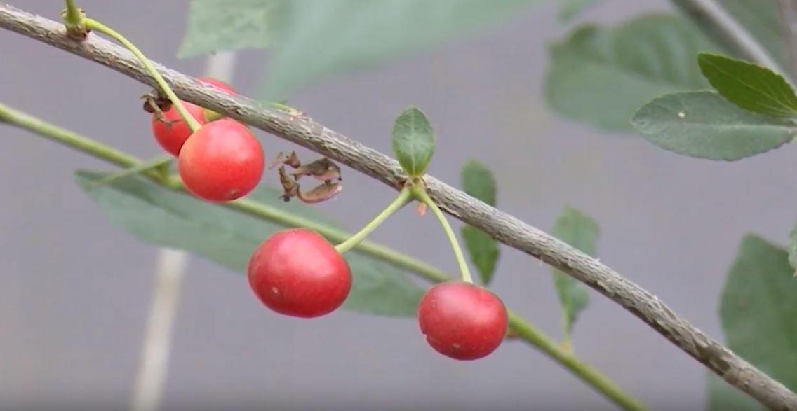 05-abrikosy Главная