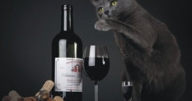 вино для котів