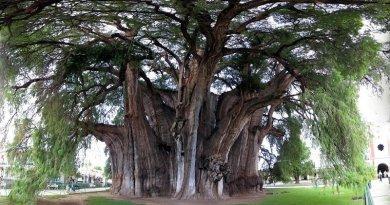 дерево_з