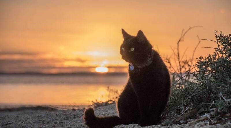 кошка Уиллоу
