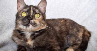 кошка Жужа из Днепра