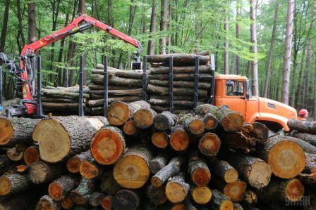 Узбекистан – лидер по импорту леса из Томской области