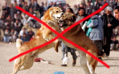 В Ташкенте объявили войну собачьим боям