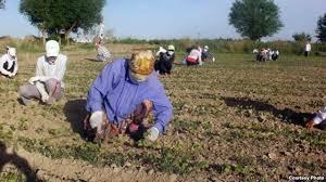 Агрепина Шин признала принудительный труд