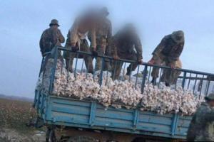 Трактор насмерть раздавил двух солдат на хлопке в Сырдарье