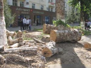 В Узбекистане посчитали незаконно вырубленные деревья с начала года