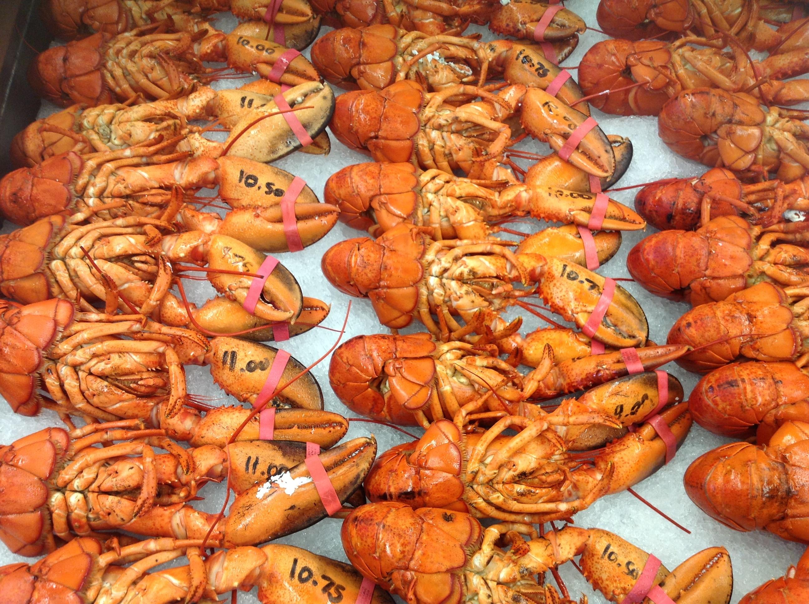 lobsters-in-nb