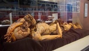 Cronenberg Exhibition