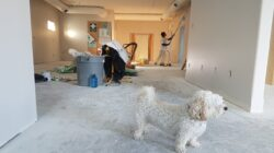 apartment renovation and a dog