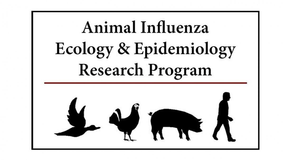 Animal Influenza Ecology and Epidemiology Research Program