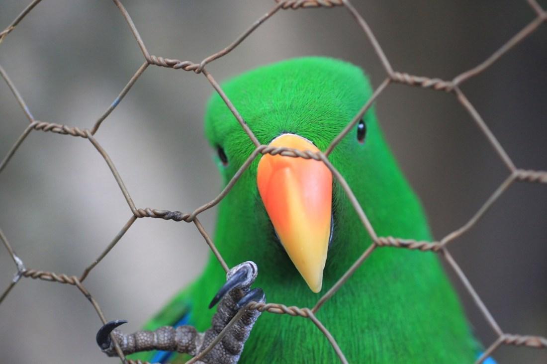 Птички Елены Пятибрат