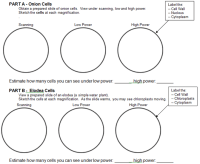 Microscope Lab Worksheet Free Worksheets Library