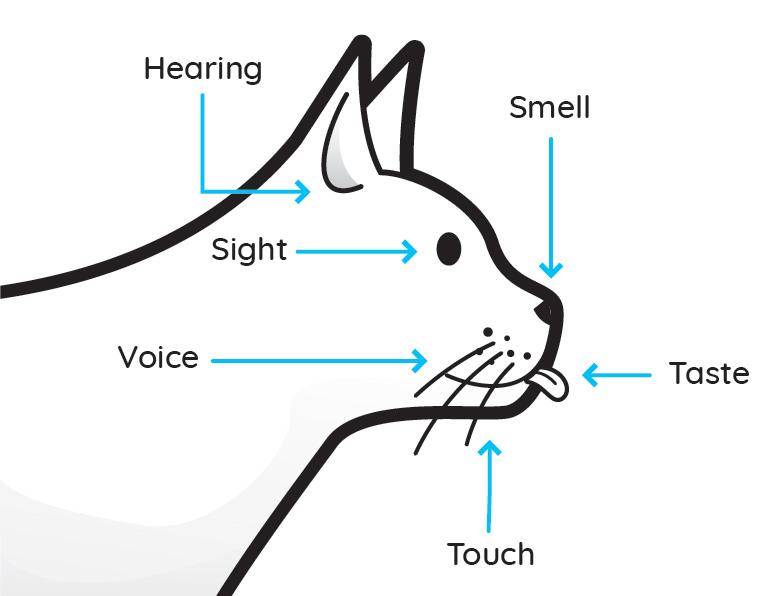 Pet senses