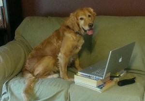 Golden at computer