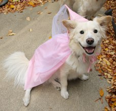 dog in princess costume