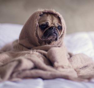 hypothyroid dog, ask a vet
