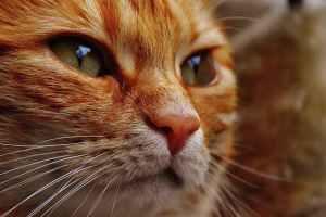 cat tumor