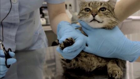 Кот в руках ветеринара