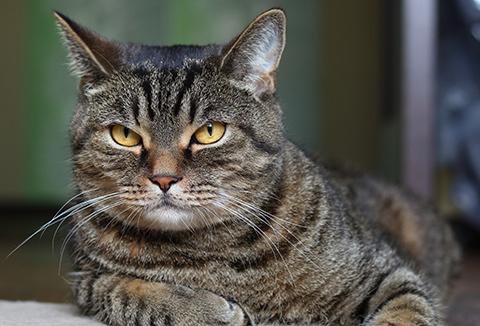 вирусная инфекция у кота симптомы