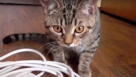 кот и прводка