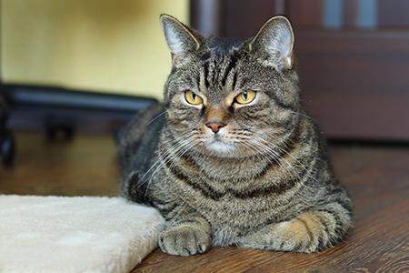 кот сэм