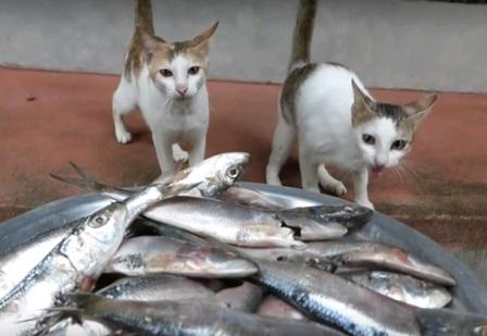 кошки и рыба