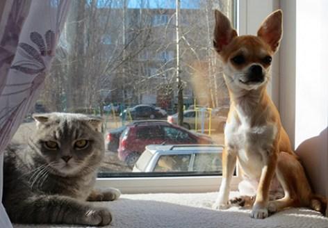 собака и кошка на окошке