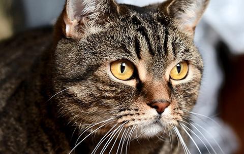 глаза кота