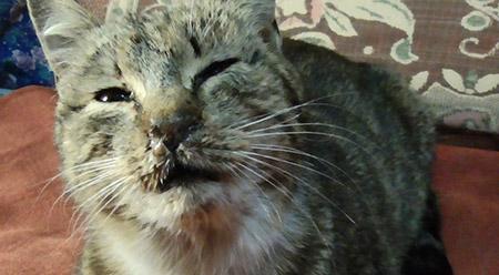 У кота сопли и чихает чем лечить