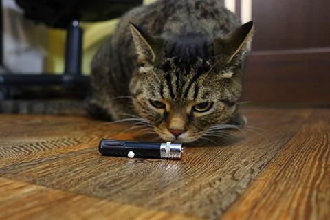лазерная указка и кот